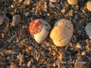 1-seashells